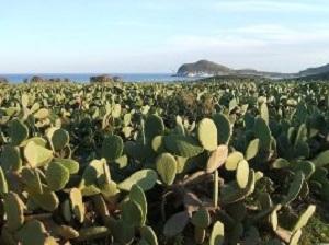 Cabo De Gata Cactus