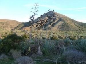 Cabo de Gata Hills