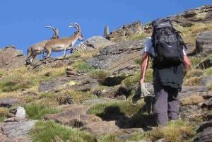 The Local Wildlife